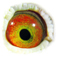 B2171305 14 Superbowl eye